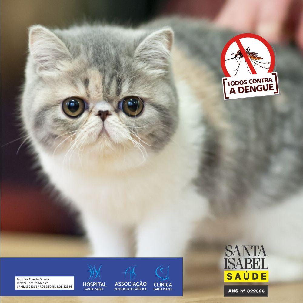 Você conhece a infecção que pode ser transmitida pelos gatos
